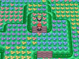 Capturer Shaymin Pokémon Diamant et Perle
