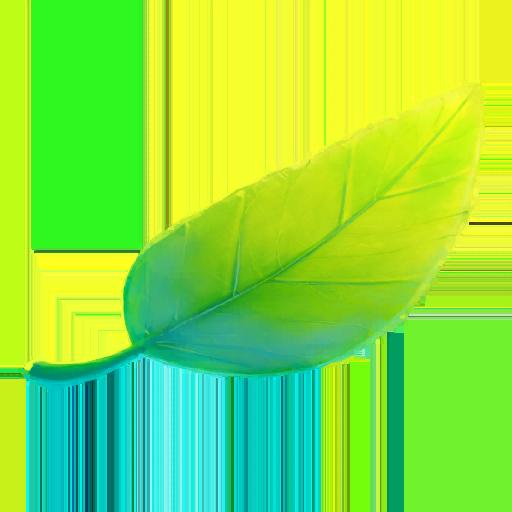 Copain Pokémon Pretty Leaf - Pokémon GO