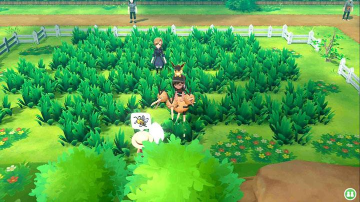 Expert Dardargnan Pokémon Let's Go Pikachu et Let's Go Évoli
