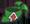 Bandana Plante 1