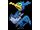Pokémon nigosier
