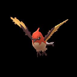 Pokémon braisillon-s