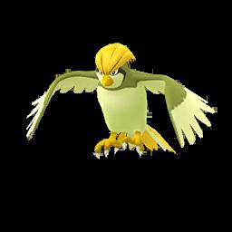 Pokémon roucoups-s