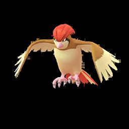 Pokémon roucoups