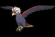 Pokémon 628